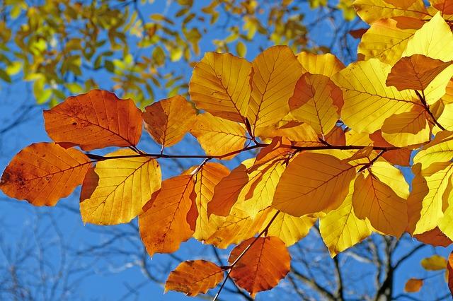 Collectionner des feuilles d'arbres