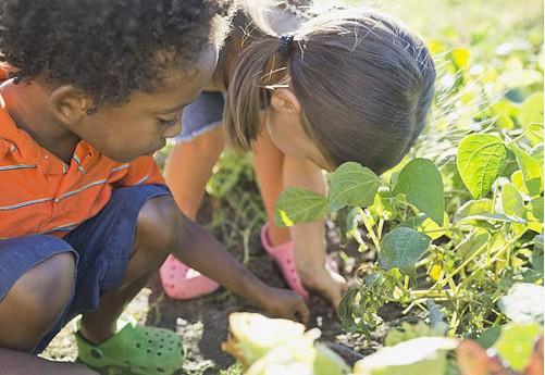 enfant-jardinage-plante