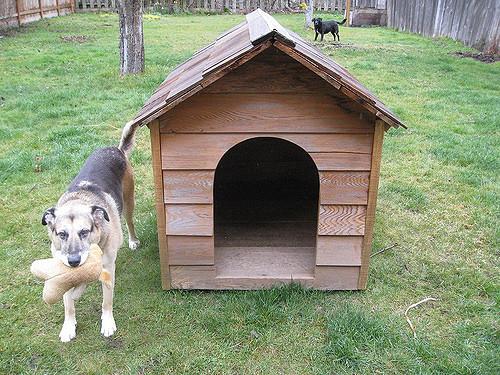 niche-avec-chien