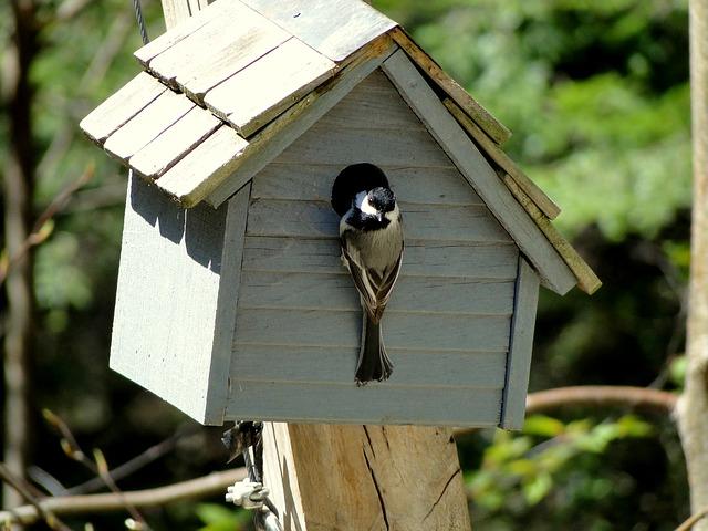 Une cabane pour les oiseaux