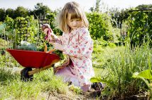 jardin-potager-enfant